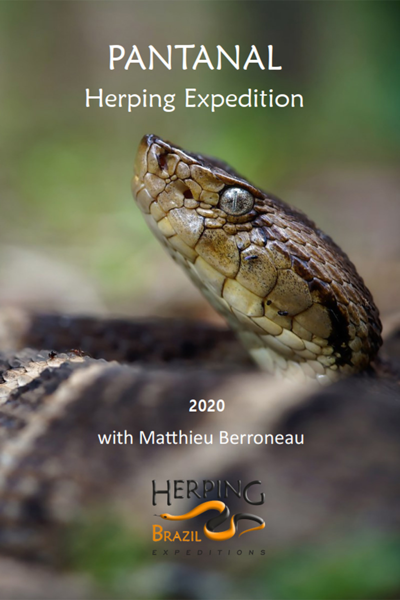 herping expedition 2019